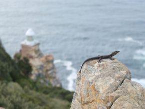 Faune Cape Point